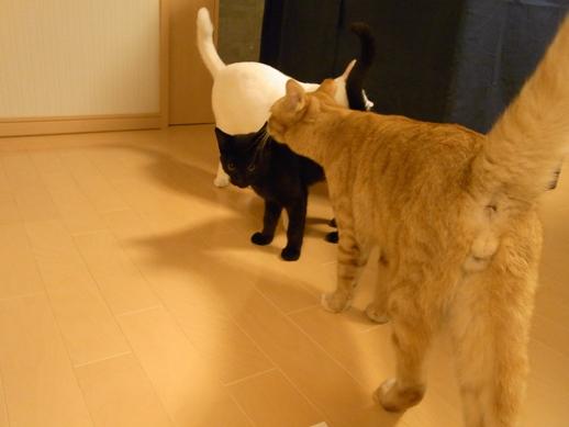 f:id:akiyochan15:20111019230713j:image
