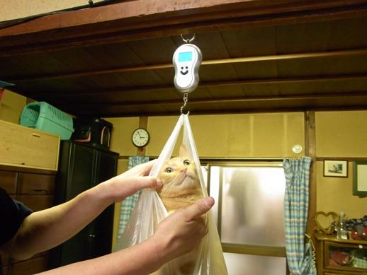 f:id:akiyochan15:20111023151728j:image