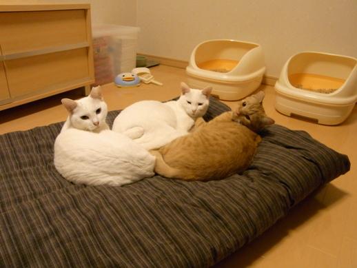 f:id:akiyochan15:20111101035008j:image