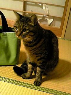 f:id:akiyochan15:20111104201520j:image