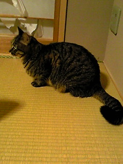 f:id:akiyochan15:20111104201601j:image