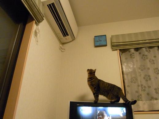 f:id:akiyochan15:20111122231113j:image