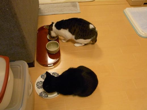 f:id:akiyochan15:20111202205711j:image