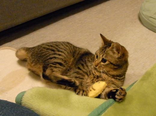 f:id:akiyochan15:20120118013350j:image