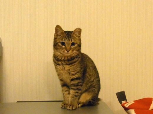 f:id:akiyochan15:20120122010900j:image:w400