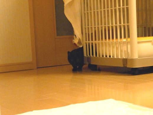 f:id:akiyochan15:20120212003240j:image