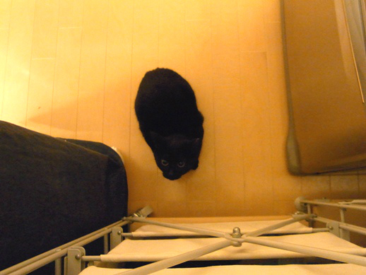 f:id:akiyochan15:20120212003306j:image