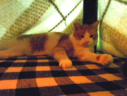 f:id:akiyochan15:20120213022912j:image