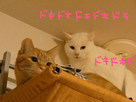f:id:akiyochan15:20120215183951j:image