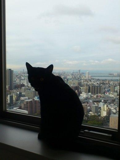 f:id:akiyochan15:20120229093553j:image