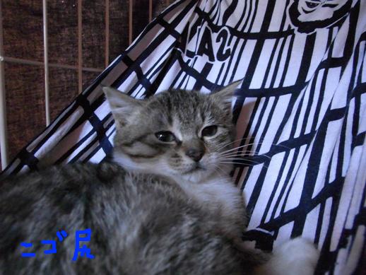 f:id:akiyochan15:20120312210215j:image