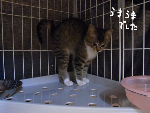 f:id:akiyochan15:20120318132400j:image