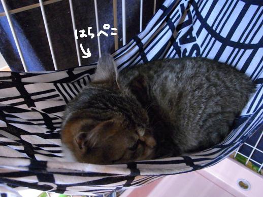 f:id:akiyochan15:20120318134124j:image