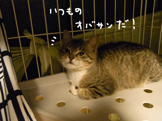 f:id:akiyochan15:20120323173628j:image