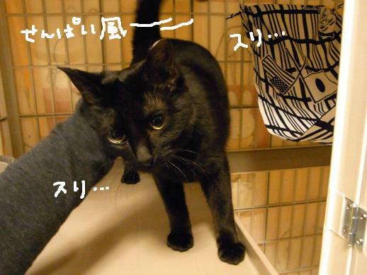 f:id:akiyochan15:20120327080724j:image