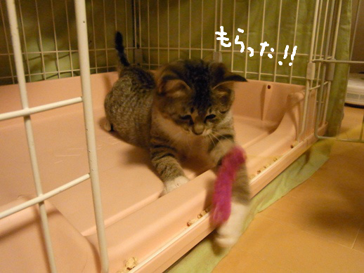 f:id:akiyochan15:20120327083119j:image