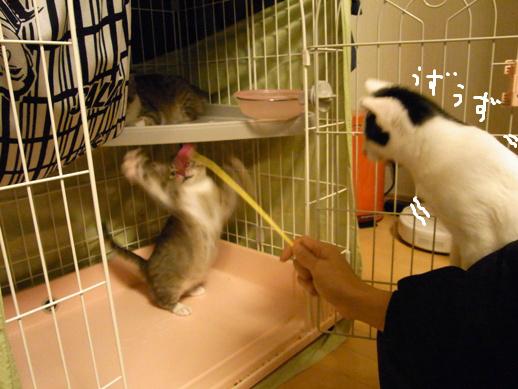 f:id:akiyochan15:20120327162247j:image