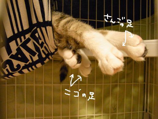 f:id:akiyochan15:20120327164213j:image