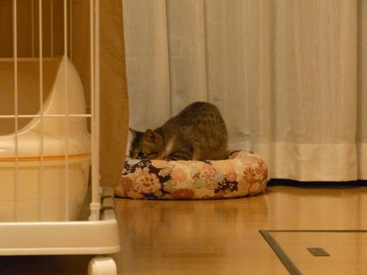 f:id:akiyochan15:20120331215922j:image