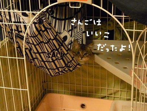 f:id:akiyochan15:20120401214320j:image