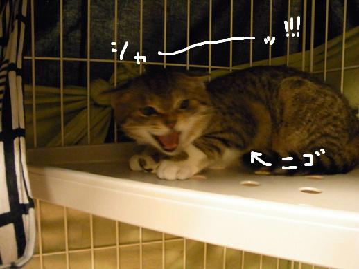 f:id:akiyochan15:20120401214853j:image