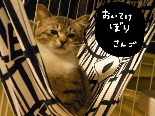 f:id:akiyochan15:20120401215510j:image