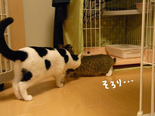 f:id:akiyochan15:20120401220754j:image