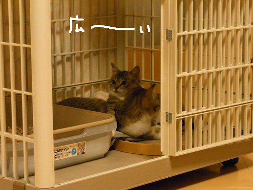f:id:akiyochan15:20120401222246j:image