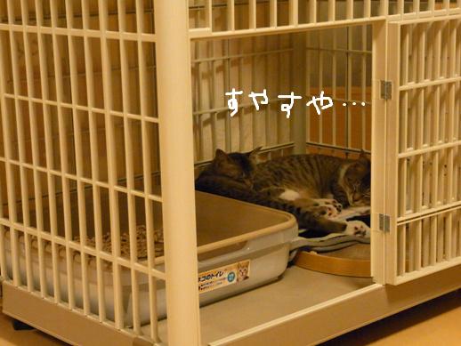 f:id:akiyochan15:20120401223723j:image