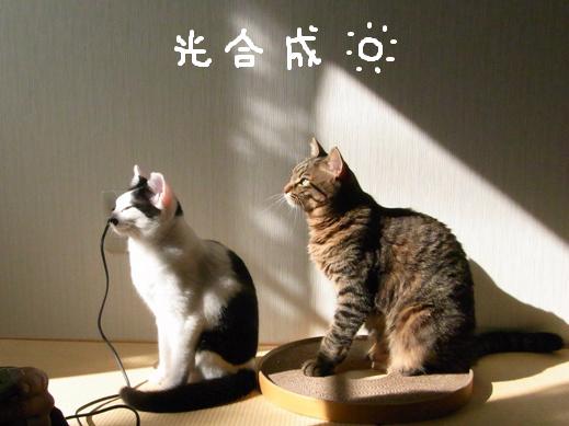 f:id:akiyochan15:20120405194321j:image