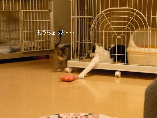 f:id:akiyochan15:20120411212028j:image