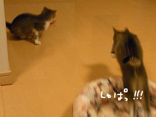 f:id:akiyochan15:20120411212613j:image