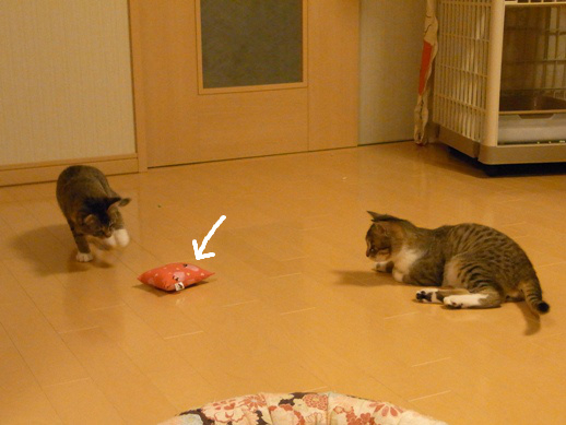 f:id:akiyochan15:20120411212713j:image