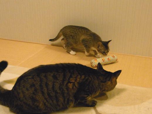 f:id:akiyochan15:20120411214804j:image