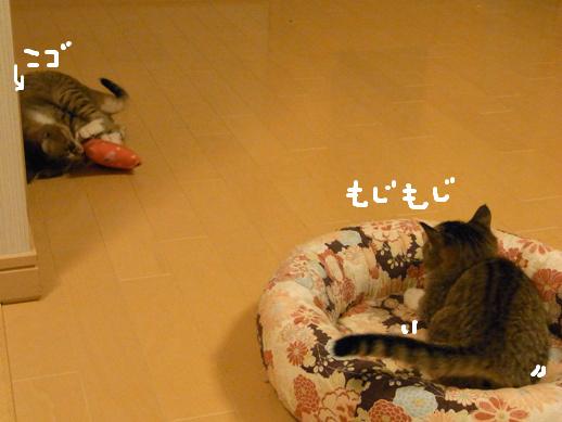 f:id:akiyochan15:20120412024026j:image