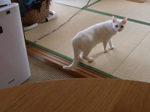 f:id:akiyochan15:20120412160706j:image