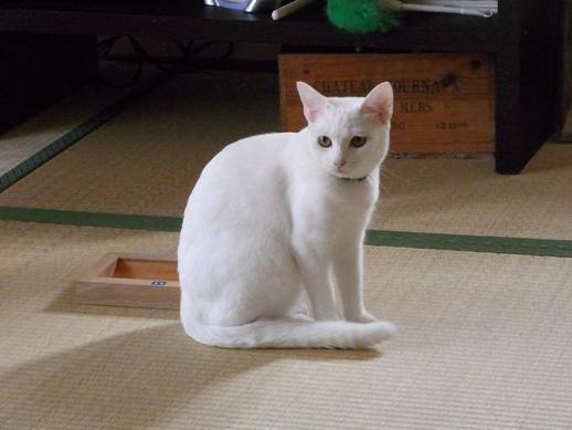 f:id:akiyochan15:20120412160715j:image