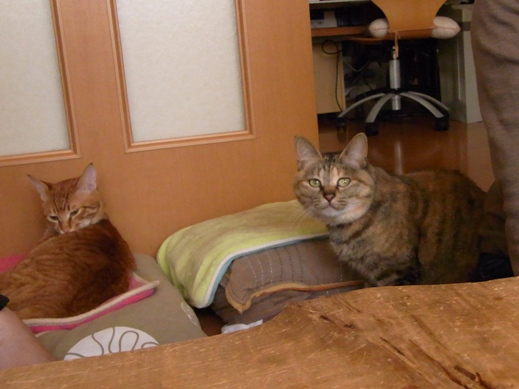f:id:akiyochan15:20120412175501j:image