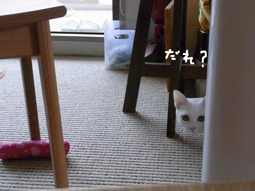 f:id:akiyochan15:20120412212626j:image