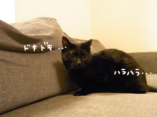 f:id:akiyochan15:20120419152219j:image