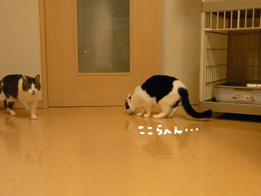 f:id:akiyochan15:20120419153701j:image