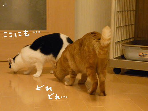 f:id:akiyochan15:20120419153933j:image