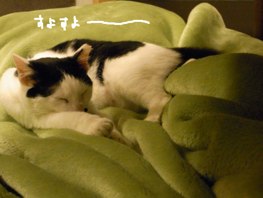 f:id:akiyochan15:20120419162418j:image
