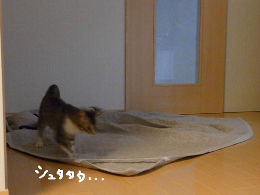 f:id:akiyochan15:20120422184825j:image