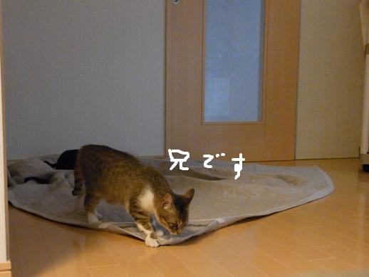 f:id:akiyochan15:20120422184939j:image