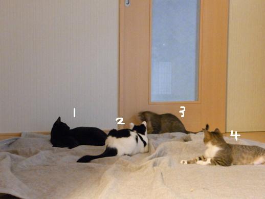 f:id:akiyochan15:20120422185043j:image