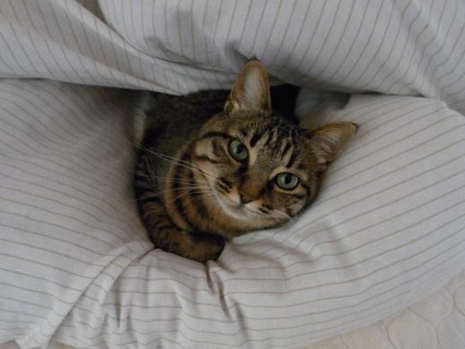 f:id:akiyochan15:20120424074607j:image