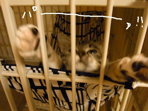 f:id:akiyochan15:20120430003517j:image