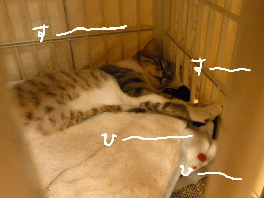 f:id:akiyochan15:20120430003938j:image