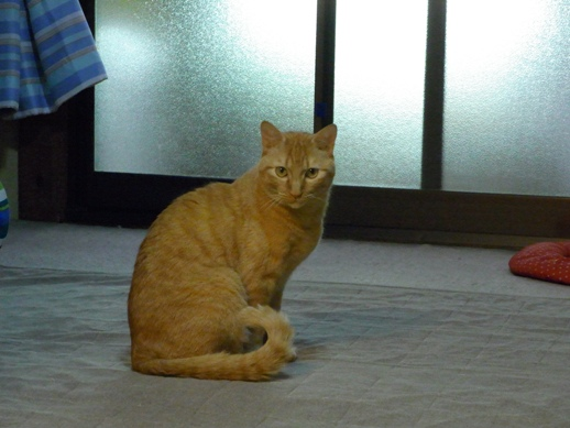 f:id:akiyochan15:20120508182218j:image